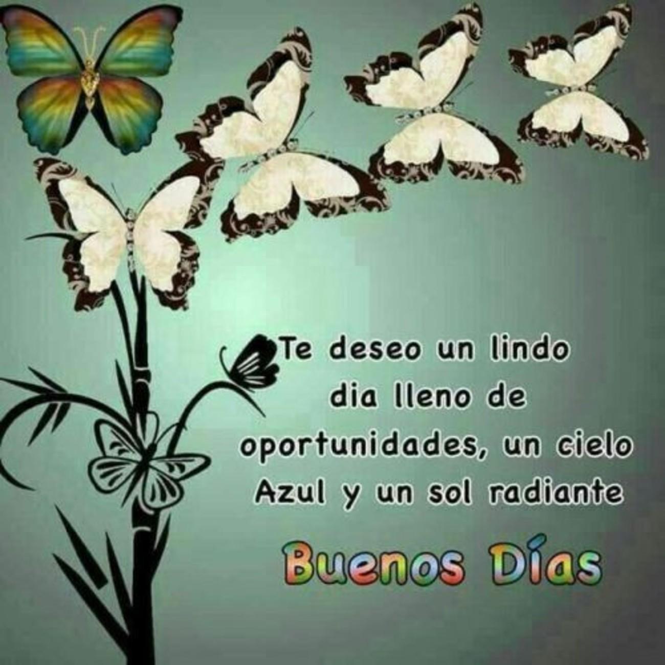 Buenos Días Imágenes Con Mariposas Bonitasimagenesnet