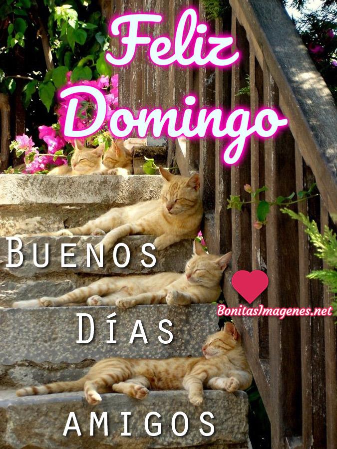 Feliz Domingo Buenos Días Imágenes Para Whatsapp Bonitasimagenesnet