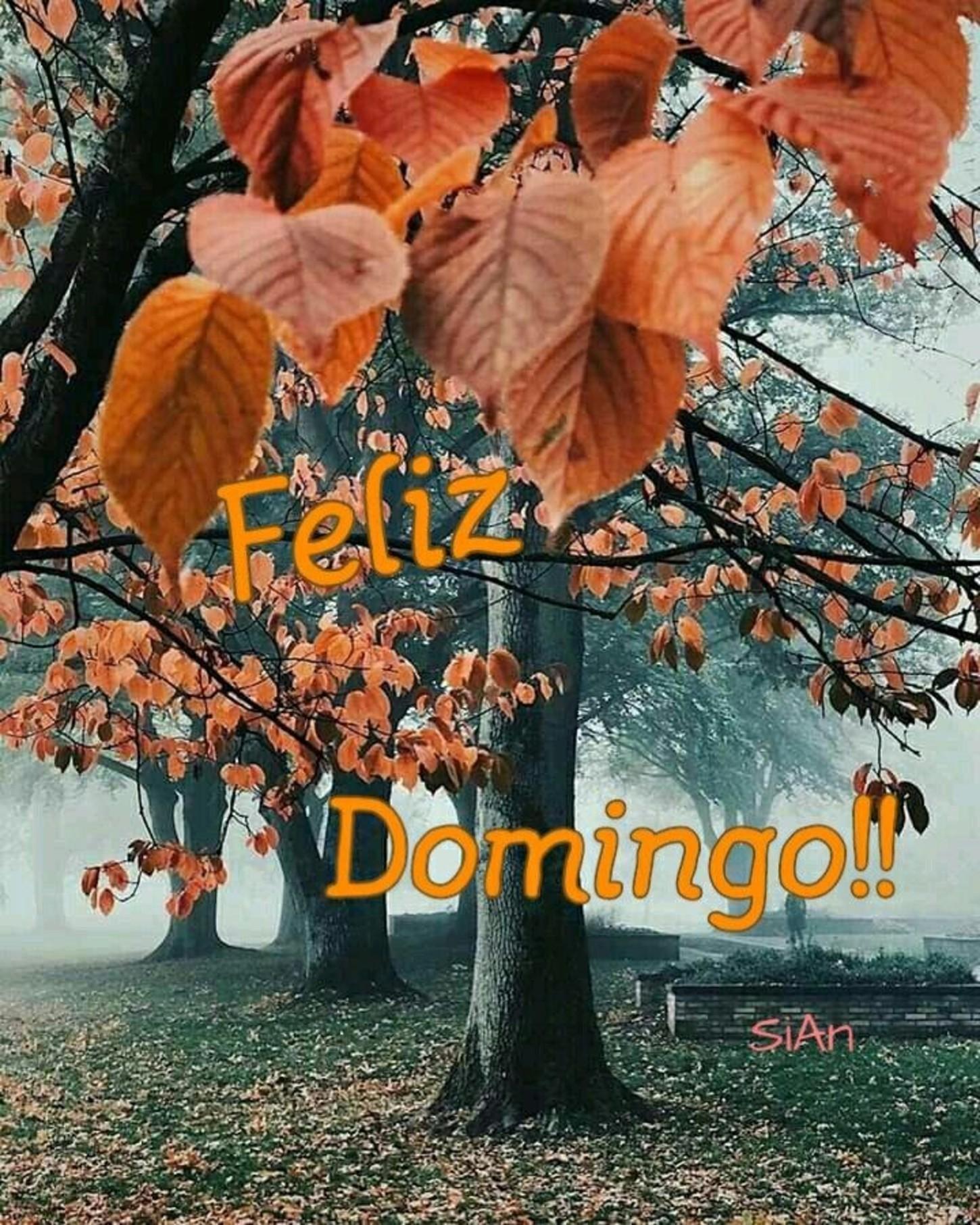 Feliz Domingo Otoño 3 Bonitasimagenesnet