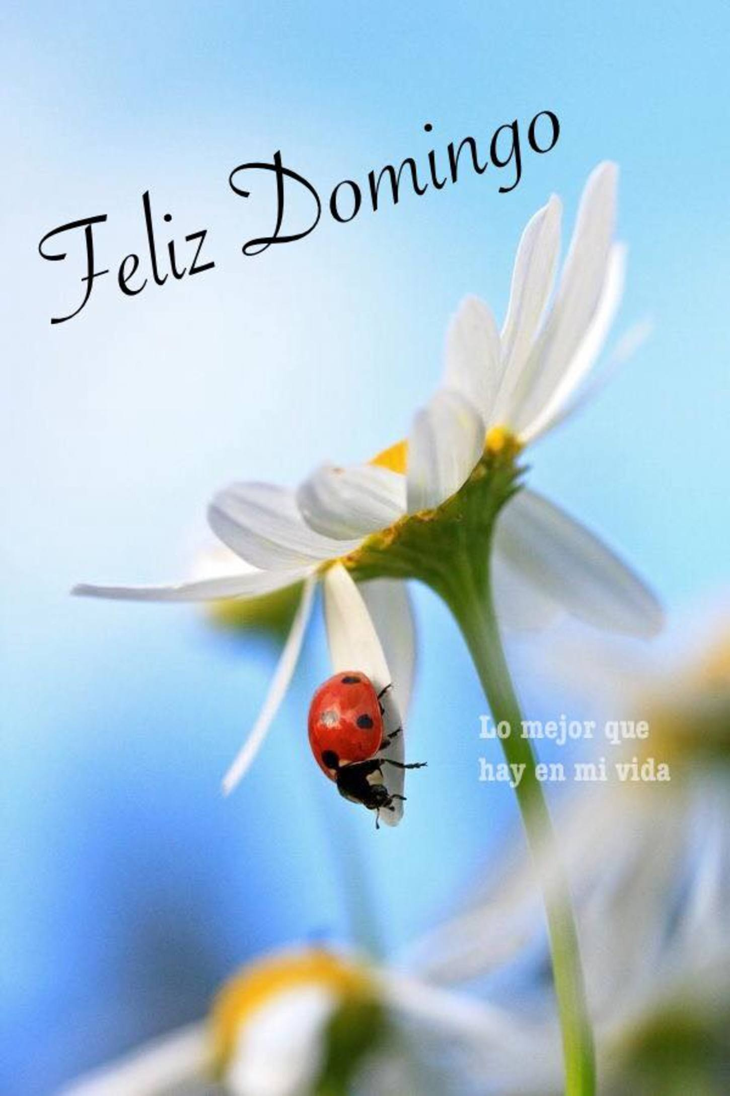 Feliz Domingo Pinterest 330