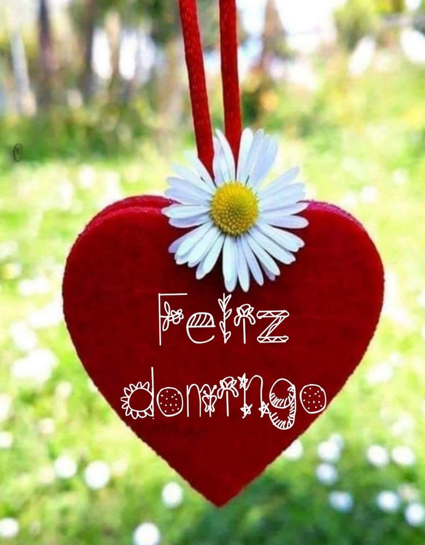 Feliz Domingo Bonitas Imágenes 238 Bonitasimagenesnet
