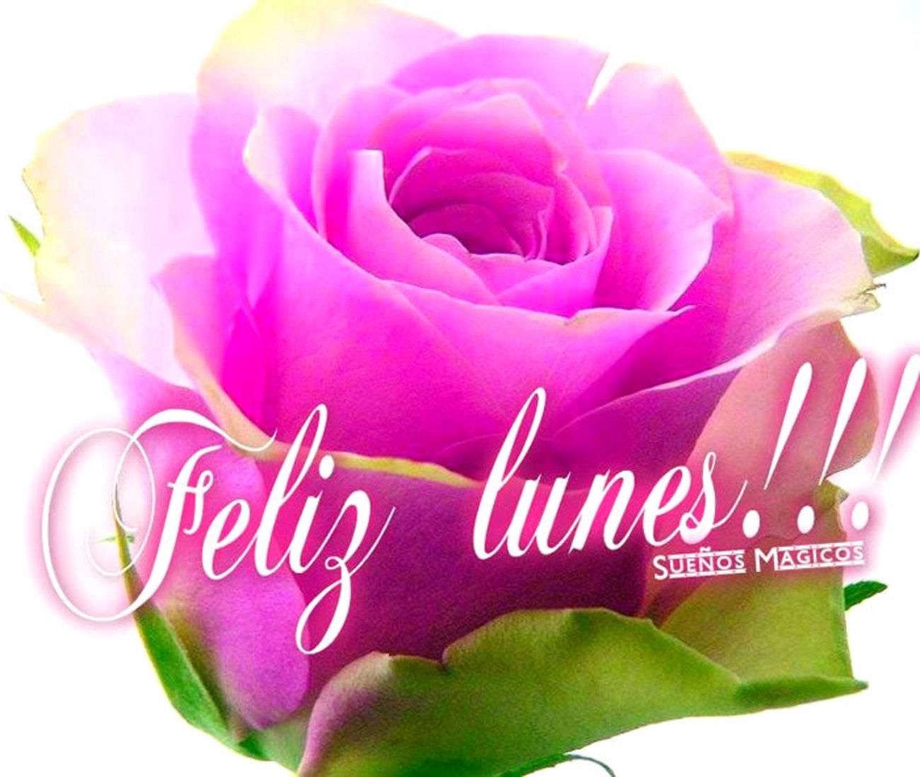 Feliz Lunes Con Flores Imágenes 157 Archives Bonitasimagenesnet