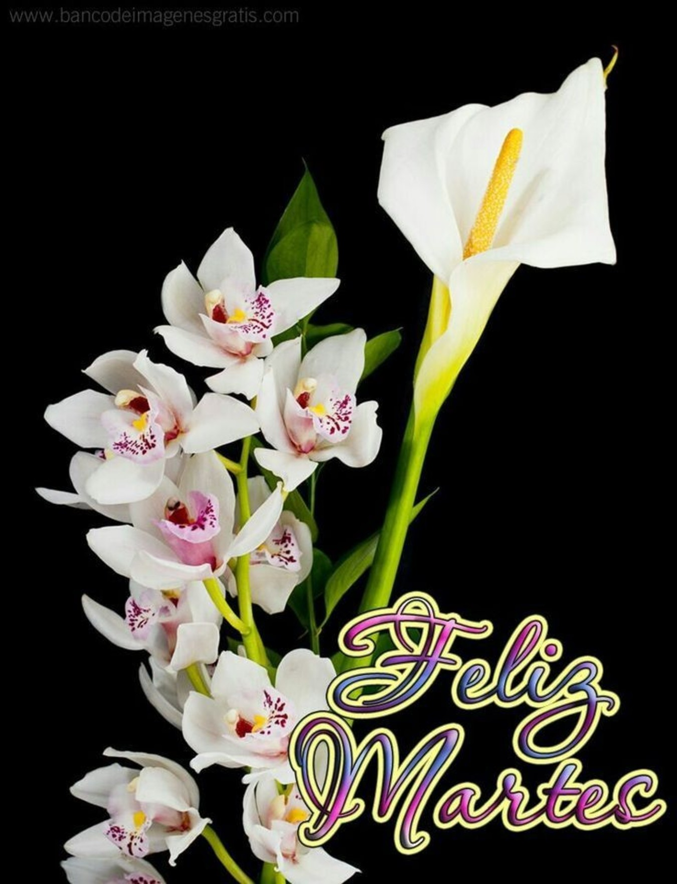 Feliz Miércoles con flores imágenes 6