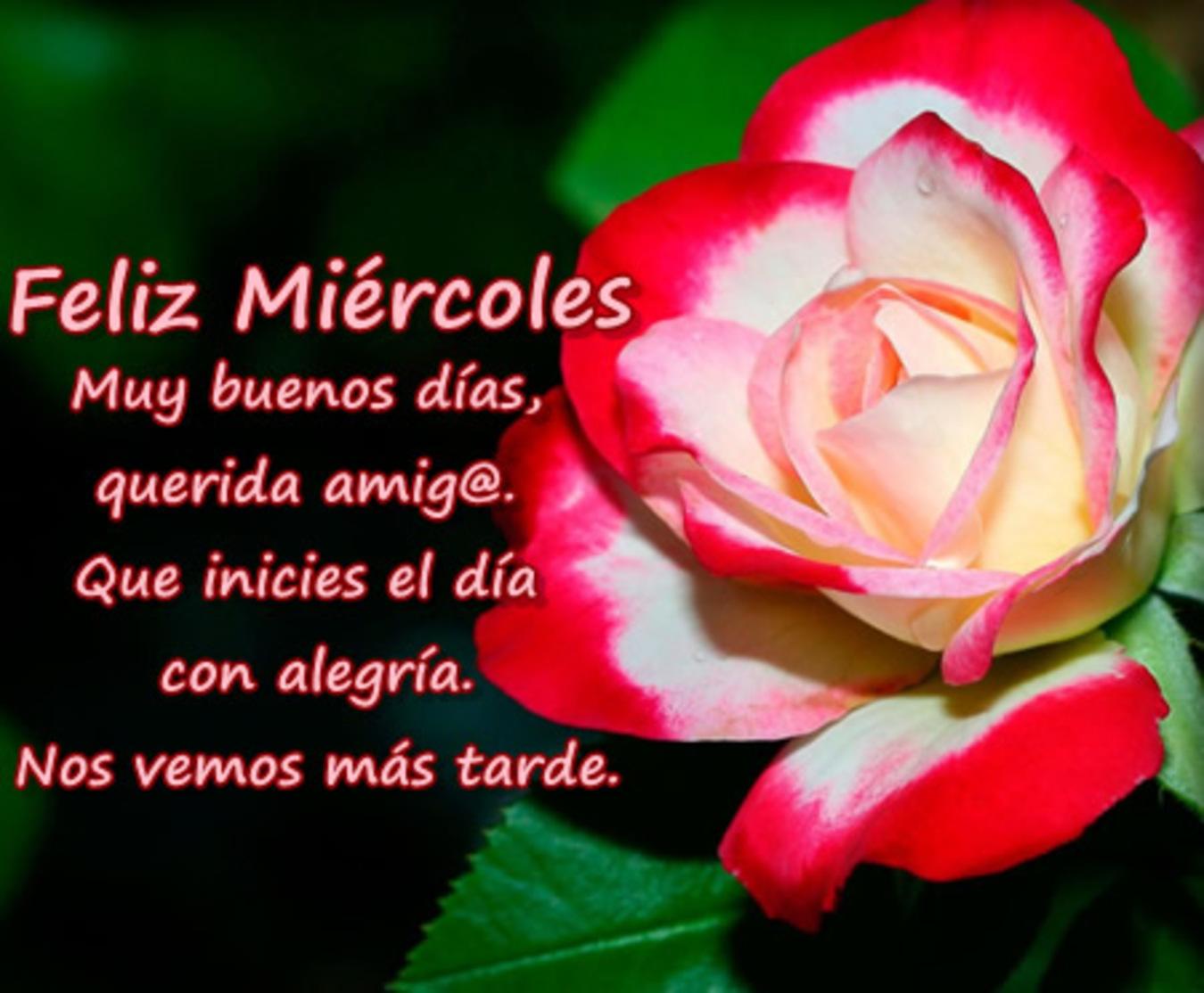 Feliz Miércoles con flores imágenes 77