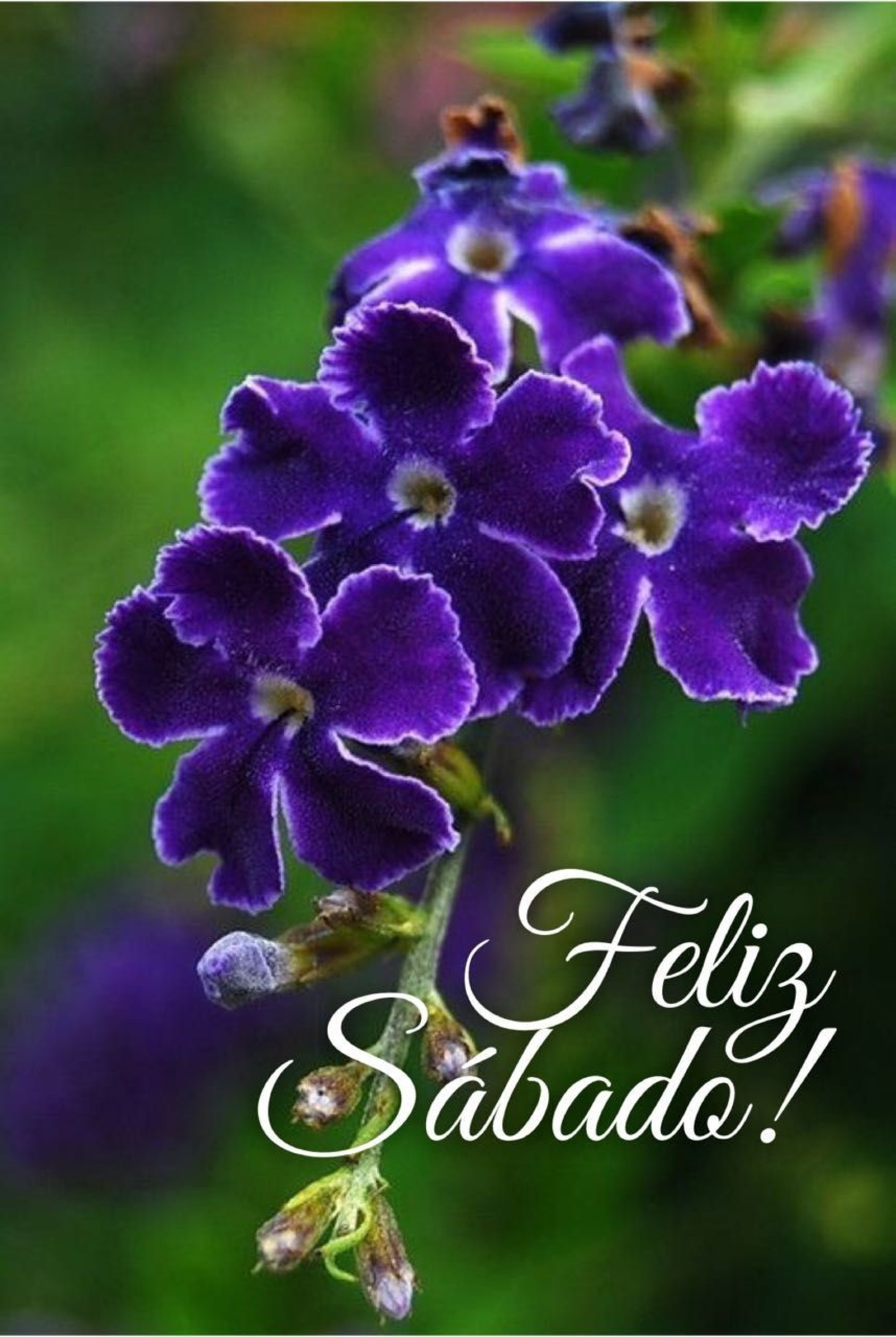 Image result for feliz sabado