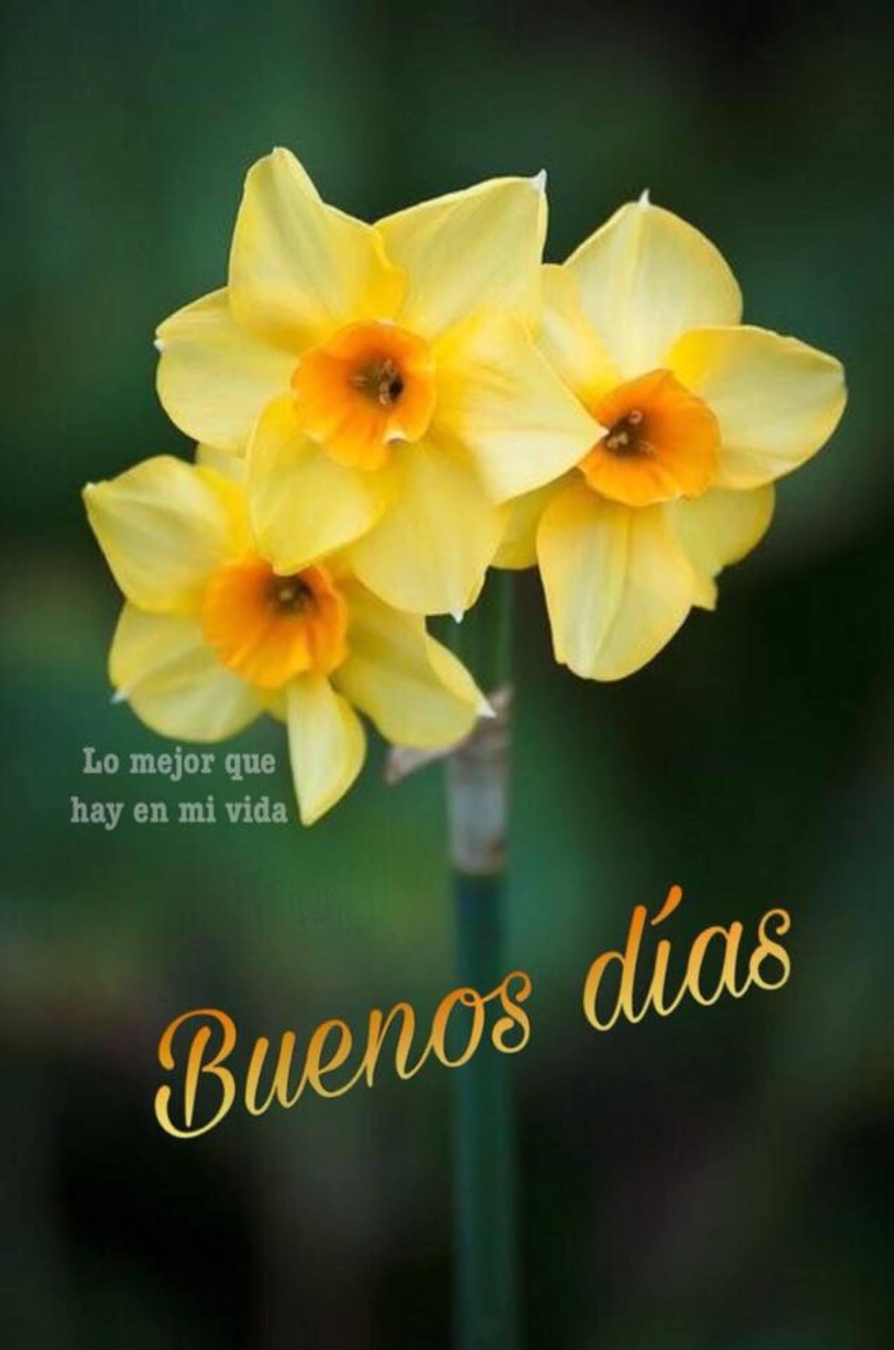 Buenos Días bonitas frases 793