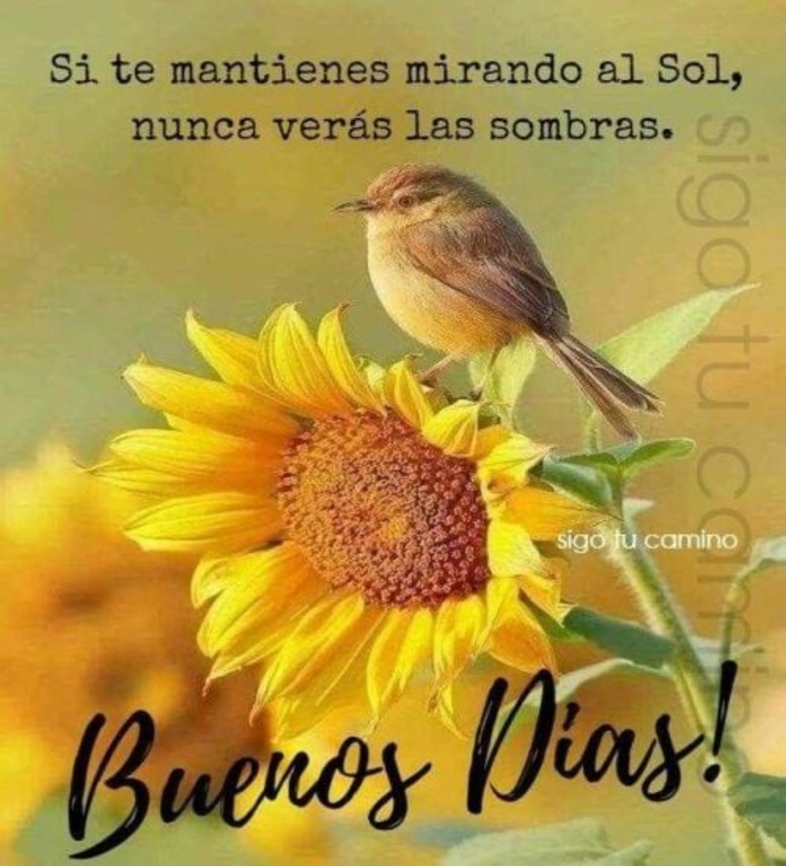 Buenos Días imagen 884