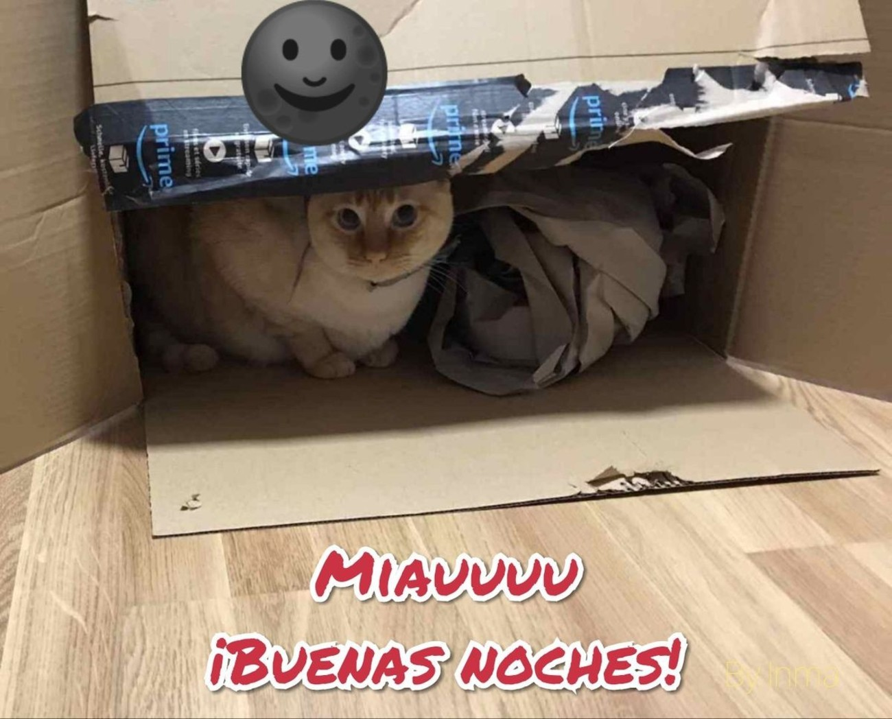 Miauuuu Buenas Noches 656